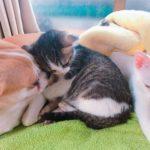 【責任あるペット共生を】 Vol.1 「犬猫殺処分」からペット共生を考える