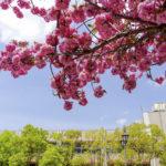 シニアが気になる「今春の大学公開講座」Vol.2〈早稲田,明治,中央大学〉