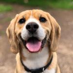 【高齢者とペット】高齢者が犬を飼うことで期待できる効果とは?