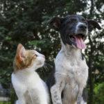 【高齢者にオススメなペット】人気飼育犬種・猫種ランキング2019を発表!